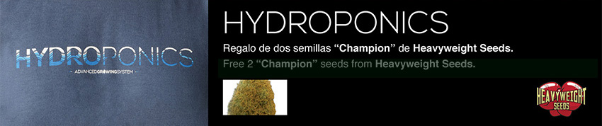 hydroponics heavyweight seeds